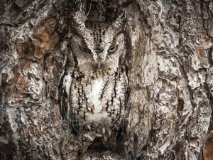 buho camuflado en un tronco