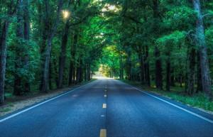 carretera con arboles