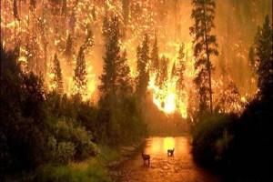 bosque-en-llamas