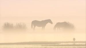 caballo-niebla